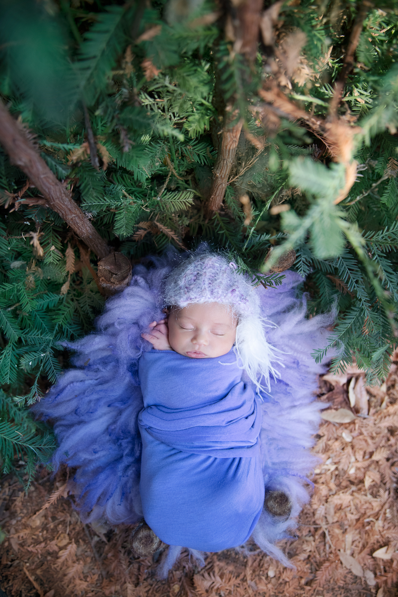 Newborn wearing purple hat and wrap rests on purple carpet outdoors during fall seasons.