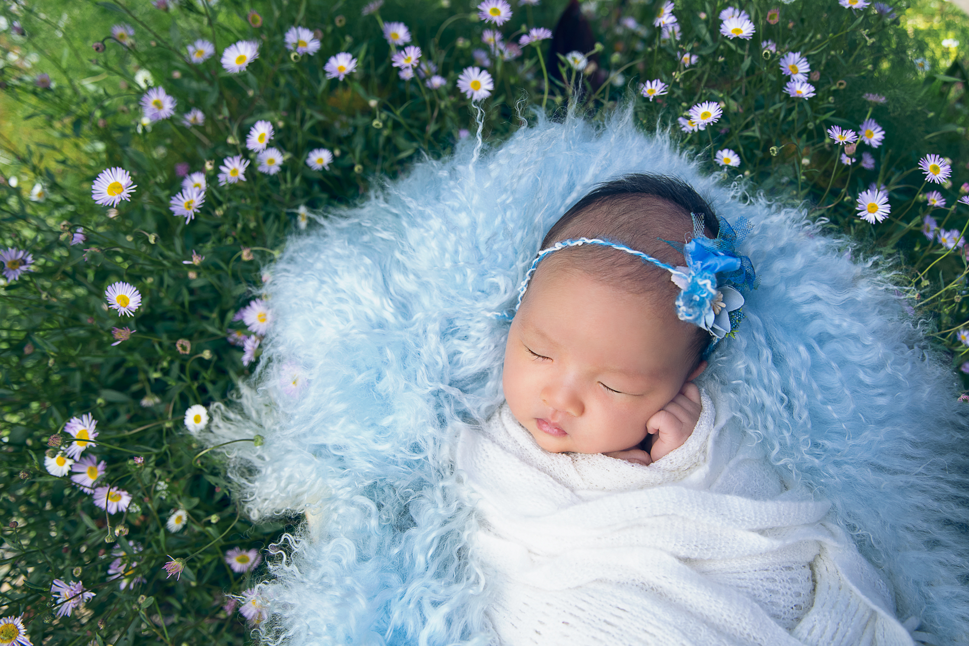 Newborn rests outdoors while wearing white wrap. Blue fluffy carpet and margaritas flowers decorates the scene.